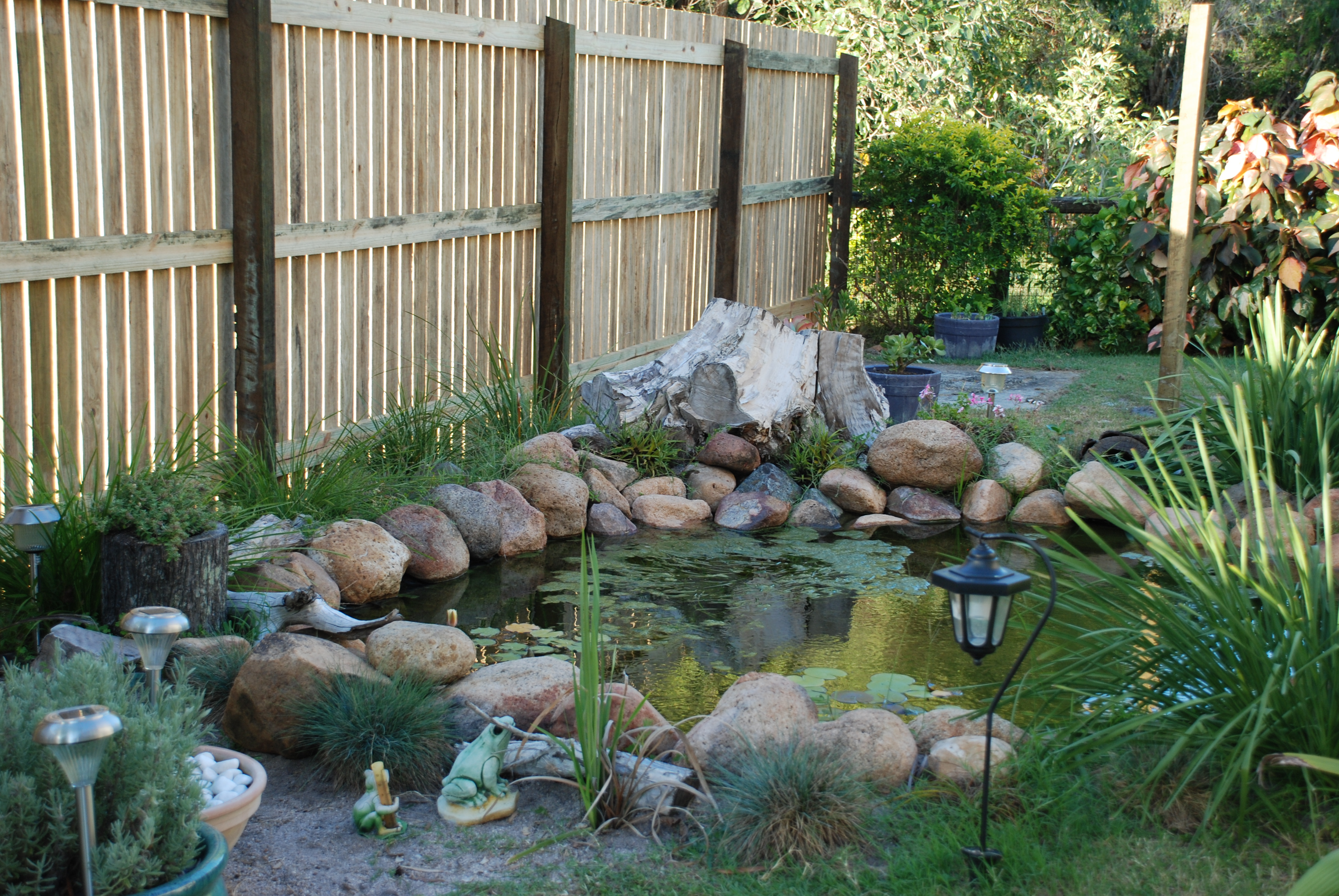 Frog Lodge   Gabrielle Bryden's Blog