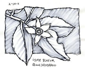 ©11 lime blossom 2-10-2011 sml