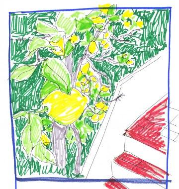 citronnier by Benedicte Delachanal