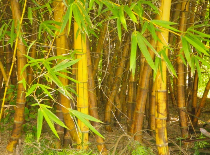 resized bamboo