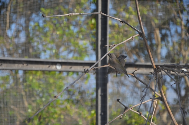 fledglings oct 2014