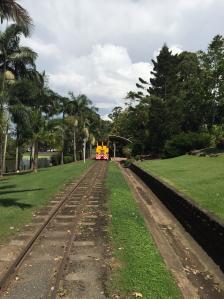 cane train