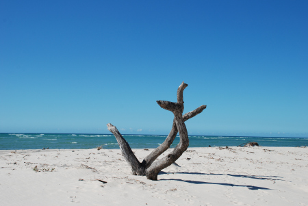 Woodgate Beach (click here)