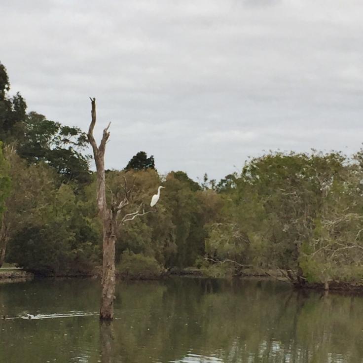 bird in tree (2)