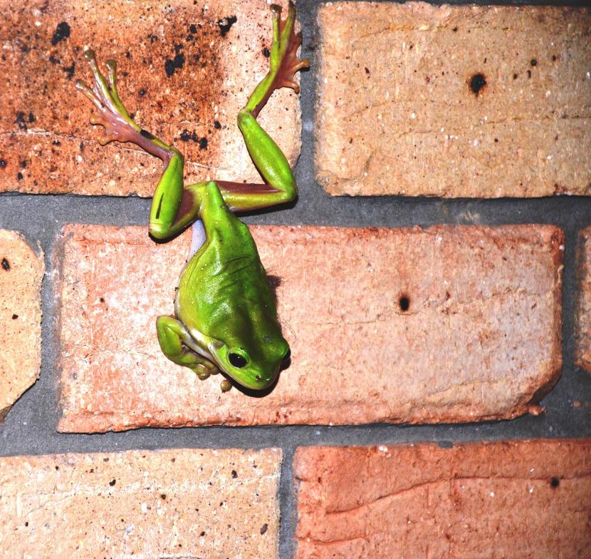 froggy