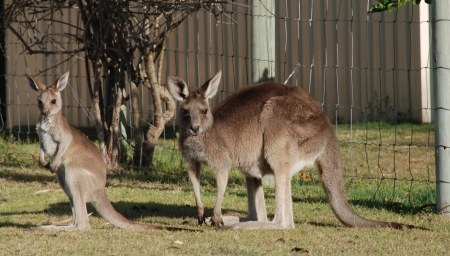 kangaroo collective