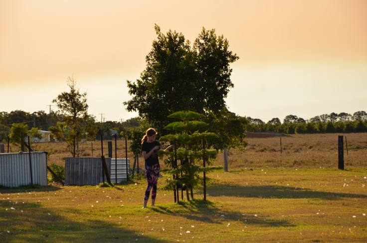 Mum's Tree 1st September 2015