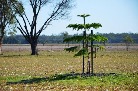 mums-tree-2014-1-sept