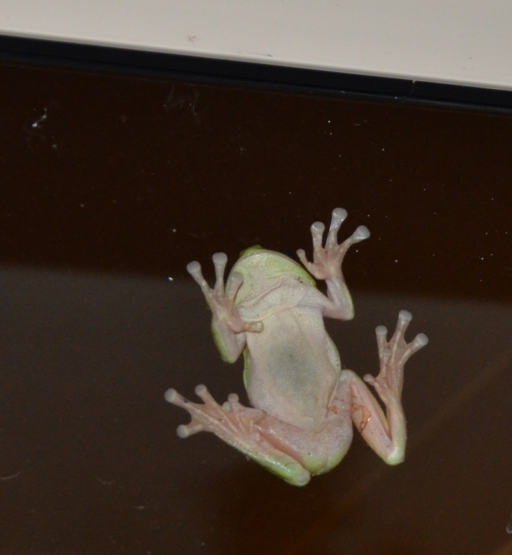 frog 010