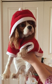 Molly Christmas (2)
