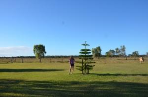 mum's tree 2016