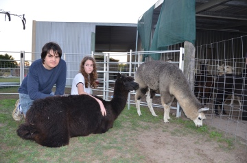 Sandys alpacas 077
