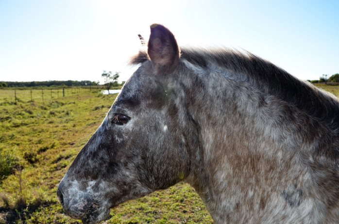 horses 041
